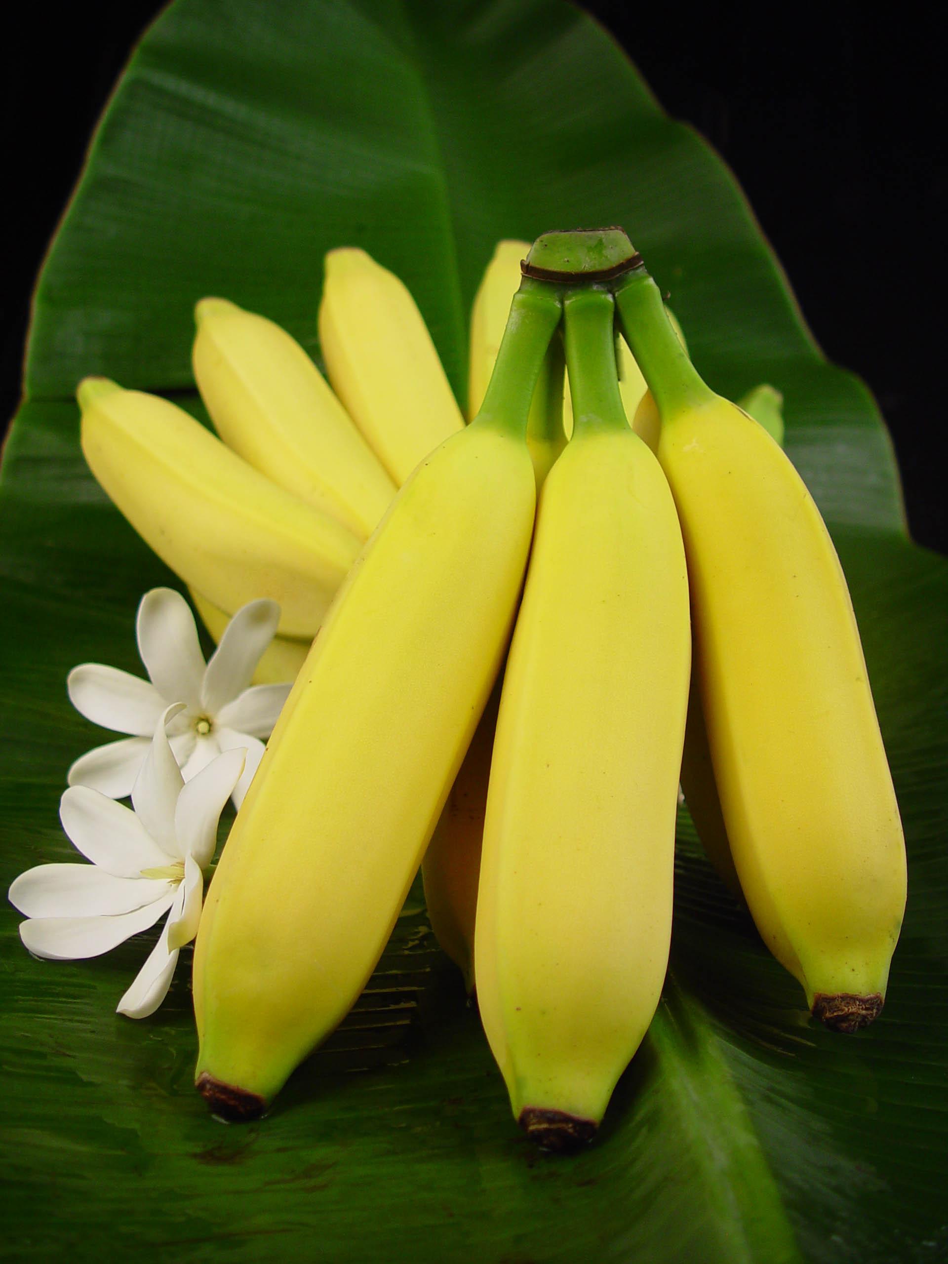 Ohana Banana Farm Home Of The Hawaiian Candy Apple Banana